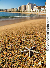 Starfish on the beach sand