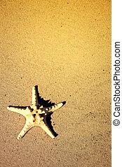 Starfish on the beach.