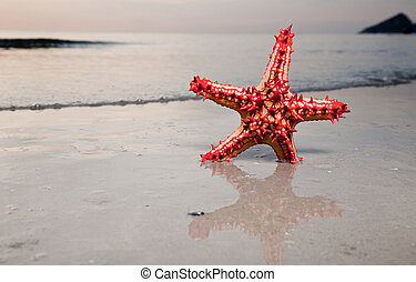 Starfish on the beachfront. Travel collection.