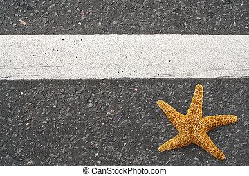 Starfish on the highway