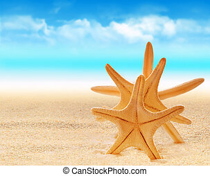 starfish on the sand beach