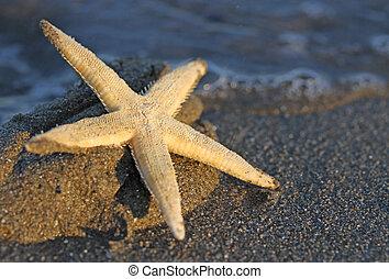 Starfish on the sandy sea beach