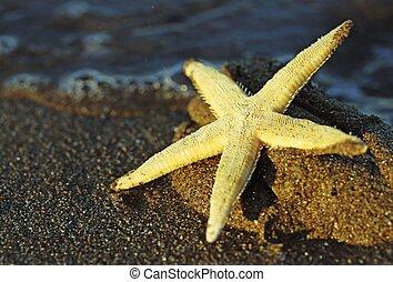 Starfish on the sea beach