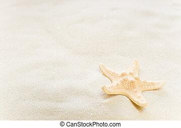 Starfish on the sea sand