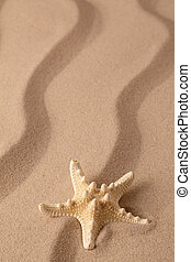 Starfish on the seashore and summer beach sand