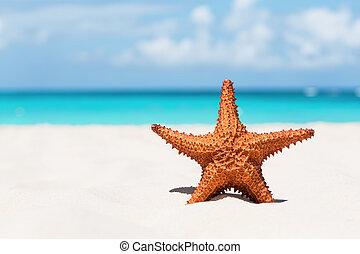 Starfish on white sandy beach