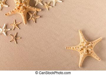 starfish or sea star on beach sand