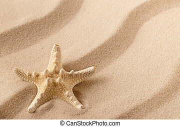 Starfish or sea star on the seashore