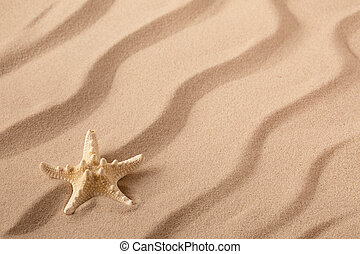 Starfish or seastar on the seashore