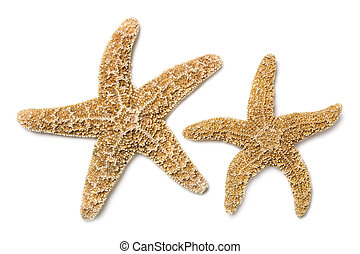 Starfish Over White - Two brown starfish, isolated on white...