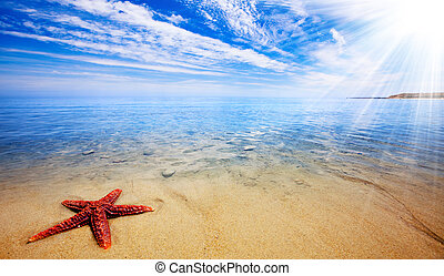 Starfish Paradise - Sun rays shine on beautiful red starfish