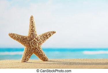 starfish, praia, em, amanhecer