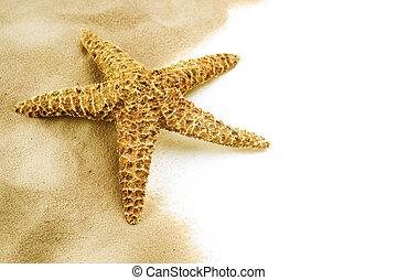 starfish, sabbia, isolato, bianco