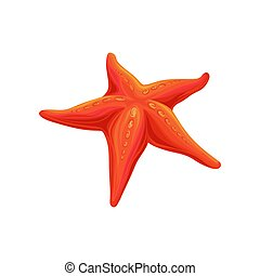 Starfish sea creature vector Illustration on a white background