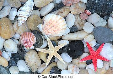 Starfish, seashell and pebble stone