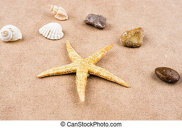 Starfish, seashells and pebbles