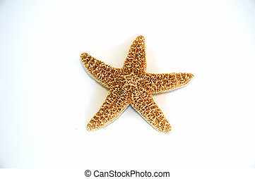 Starfish - Single isolated starfish
