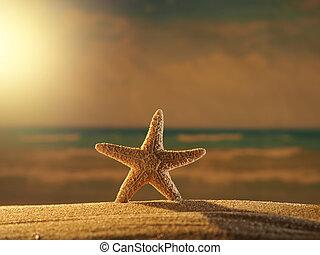 starfish, spiaggia, a, alba