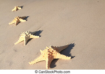 starfish, spiaggia, a, estate