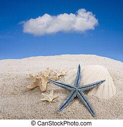 starfish, spiaggia
