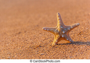 starfish, spiaggia, in, estate