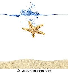 Starfish Splash