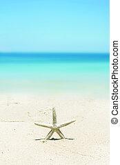 Starfish standing on the beach