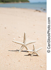 Starfish standing on the beach