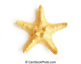 starfish - star fish isolated on white background