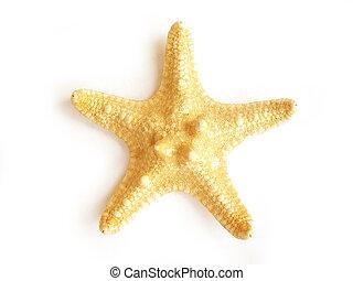 starfish - star fish isolated on white background