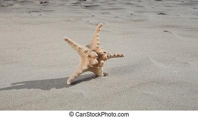 Starfish star on beach. Summer.