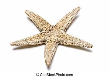 Starfish. - Starfish isolated on a white background.