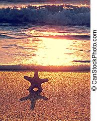 starfish, su, il, estate, spiaggia