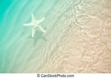 starfish, su, il, estate, spiaggia, con, sabbia