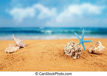 starfish, su, il, spiaggia.