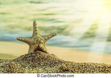 starfish, su, il, spiaggia tropicale
