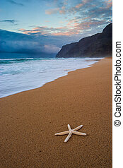 starfish, su, polihale, spiaggia, a, tramonto, kauai, hawai