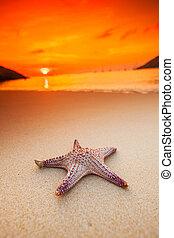 starfish, su, spiaggia