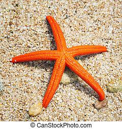 starfish, su, uno, spiaggia