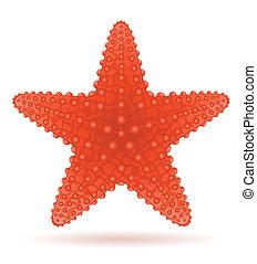 starfish vector illustration