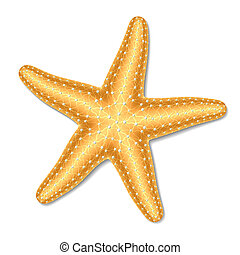 Vector illustration of a starfish