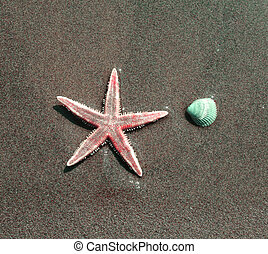 Starfish with a shell on the shore of the sea