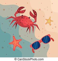 starfishes, 浜の 砂, サングラス, カニ