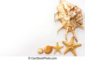Starfishes and shells isolated on white background