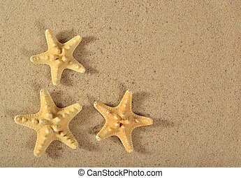 Starfishes close-up on a sand