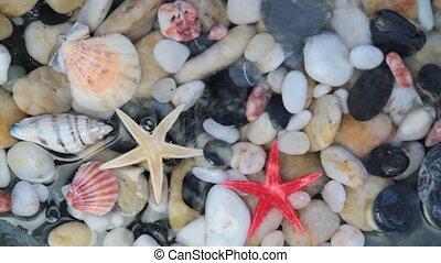 starfishes, kiesel, steine, und, seashells, in, kristall...