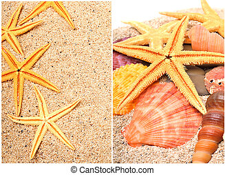 starfishes on the beach sand