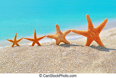 Starfishes on the beach against a turquoise sea