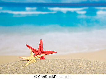 Starfishes on the beautiful sea coast - Red and yellow...