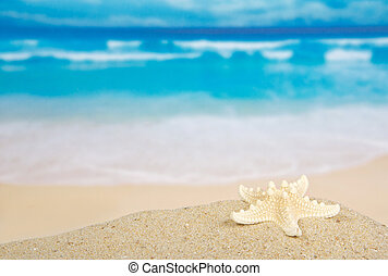 Starfishes on the beautiful sea coast